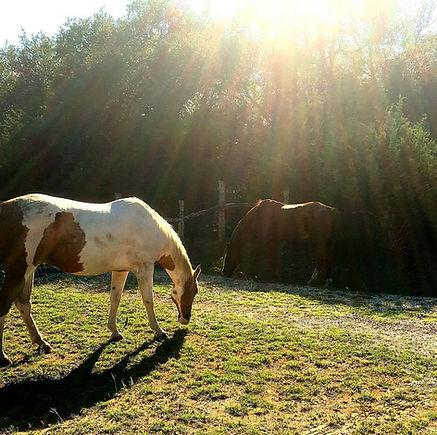 yDOG Horses.jpg