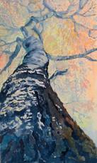 Срібна тополя Куренівського парку, серія Із життя дерев