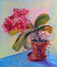 Улюблена орхідея цвіте завжди