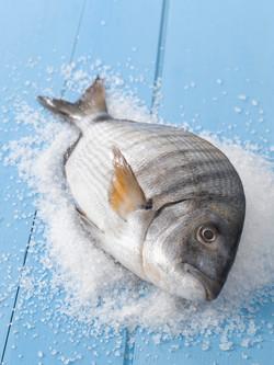 Wild mediterranean Saragus Fish