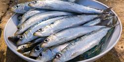 Wild Mediterranean Sardines