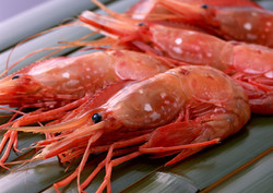 Argentinian Red-Shrimp