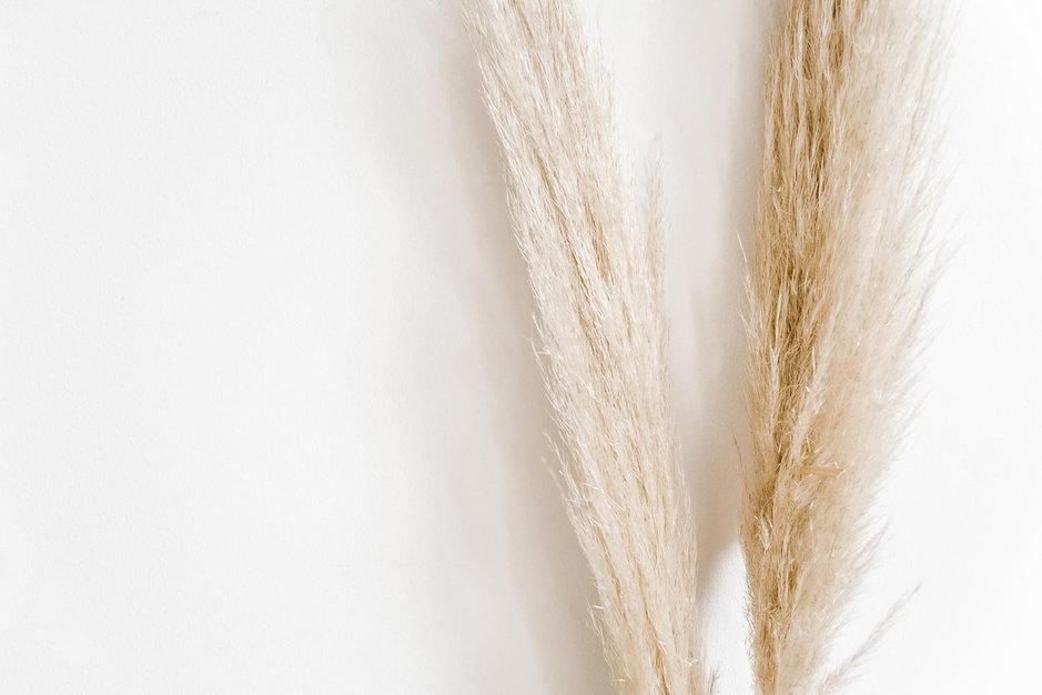 minimal-background-pampass-grass-by-lugi