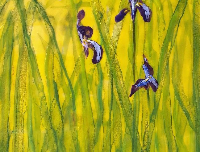 Iris Blooms