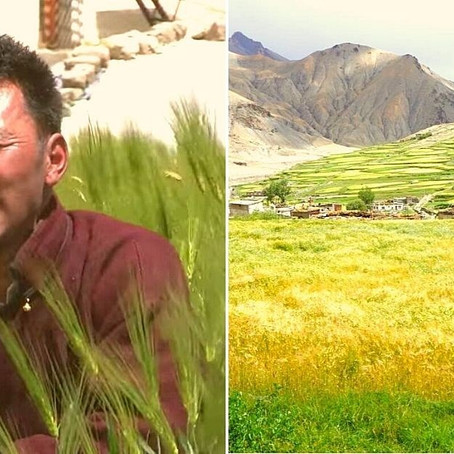 Farmer's organic farming skills earn him lakhs at the altitude of 14,000 ft. | by rachna