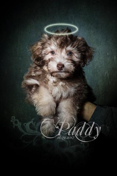 Paddy-DSC_5837.jpg