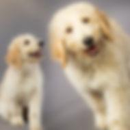 Collage-Hund.jpg