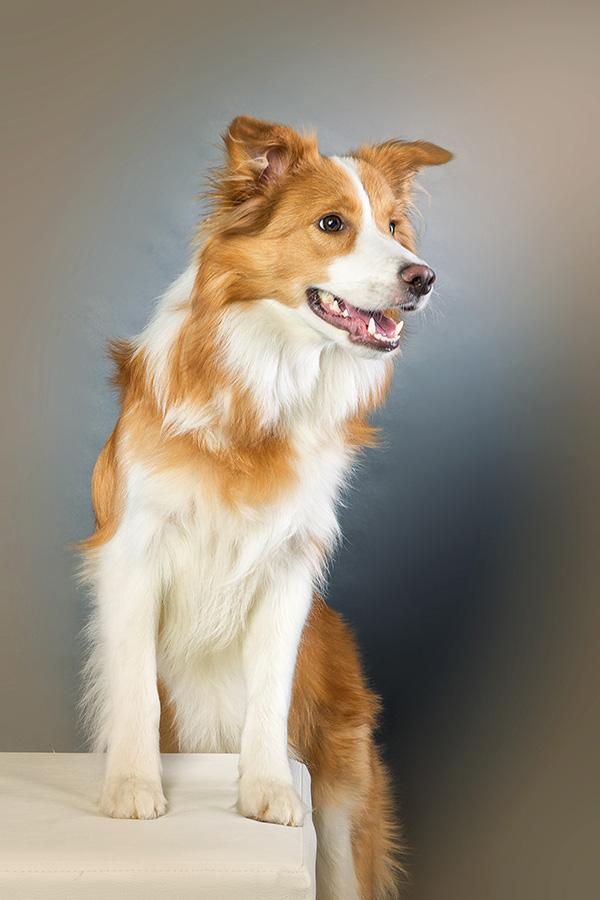 Hund-DSC_6267