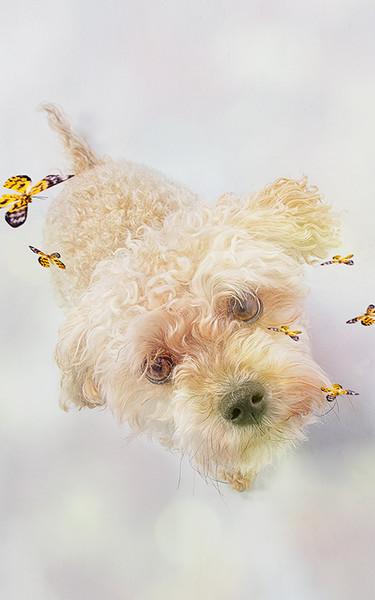 Hund5.jpg