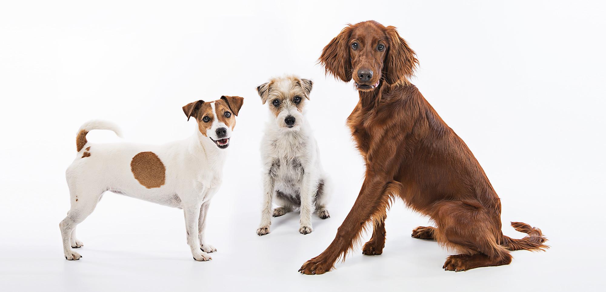 Drei_Hunde.jpg