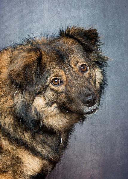Hund_9408.jpg