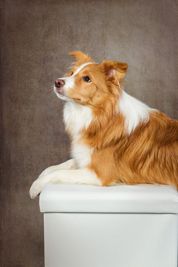 Hund-DSC_6257.jpg