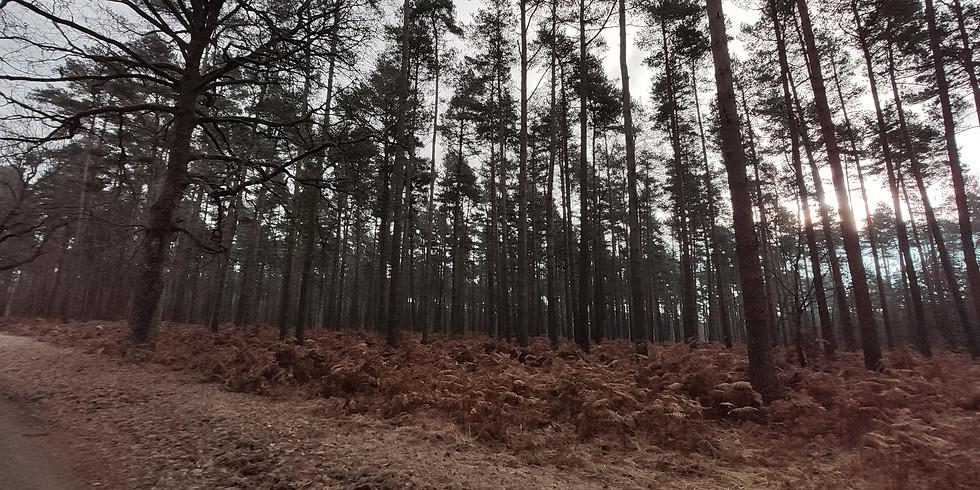 Sophro-balade forêt de Rambouillet
