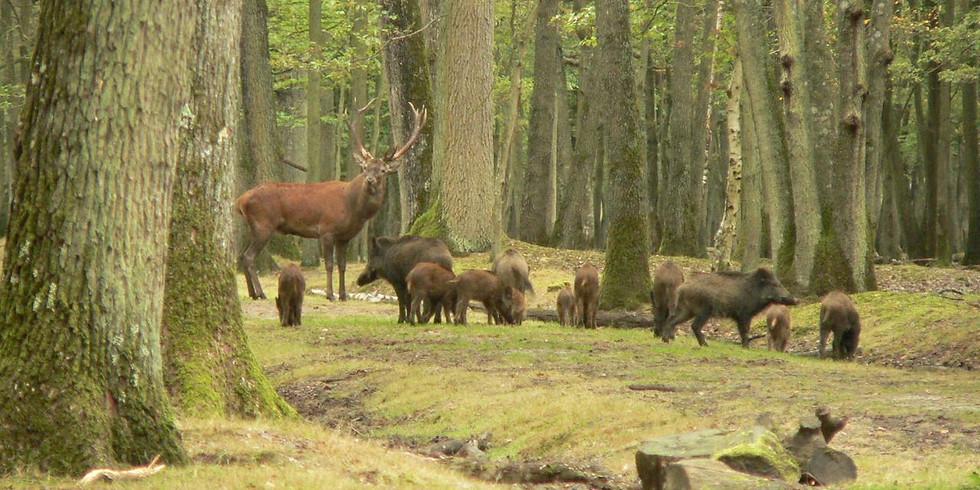 Sophro-balade en forêt de Rambouillet