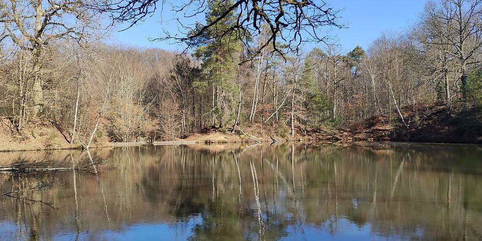 Sophro-balade en passant par l'étang Rompu