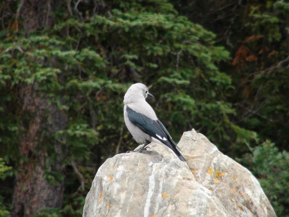 Bird perched upon a rock.