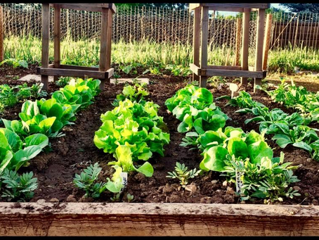 January Garden Stoke, Welcome 2019 Gardeners!