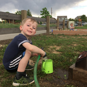 Top 10 reasons you should join a community garden (Preferably Rose Roots!)