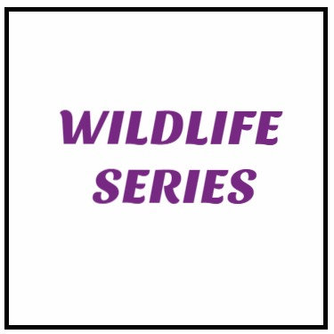 Wildlife Series