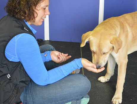 Can your dog become a service dog?
