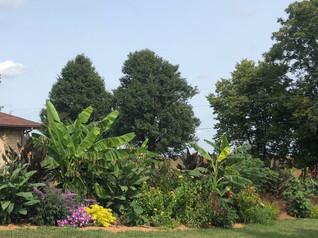 Tropical feel to an Indiana garden