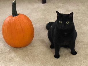 All about those black cats!