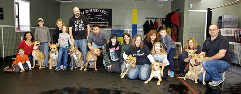 The Reunion photo from our Pitbull rescues 1 year anniversary of being born (12 pups) a few in the litter could not attend