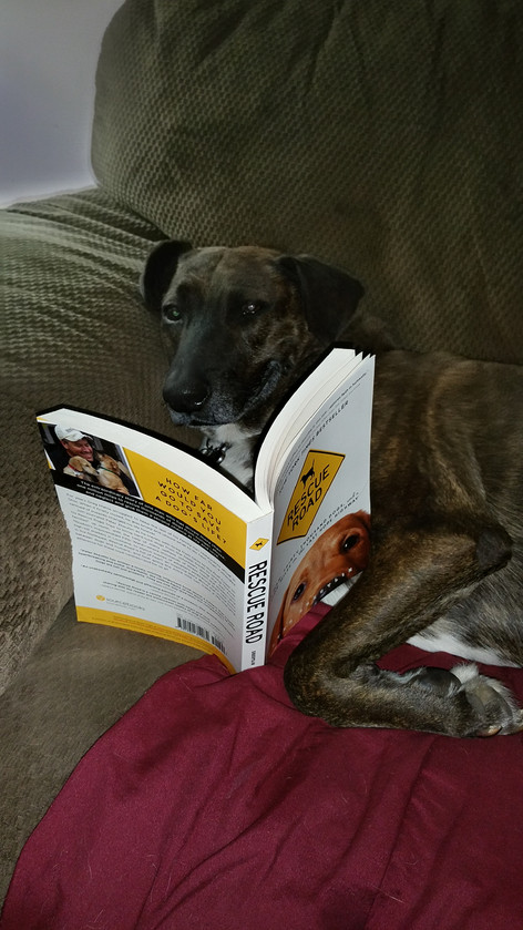 Freckles reading the Prequel to Rescued..