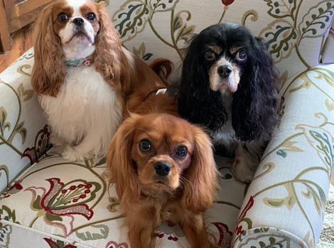 Meet Abby Rose, Rory James, and Pippa