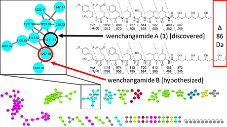 wenchangamide_A_graphical_abstract.png
