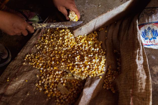 Préparation du maïs (Laos)