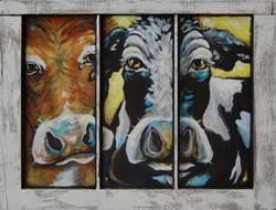 """""""Peeping Cows"""""""