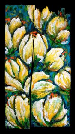 Tulips in Bloom