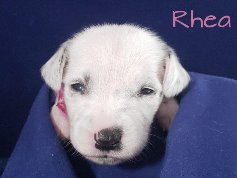 Rhea-2w (2)