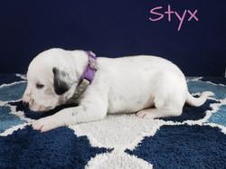 Styx-2w (5)