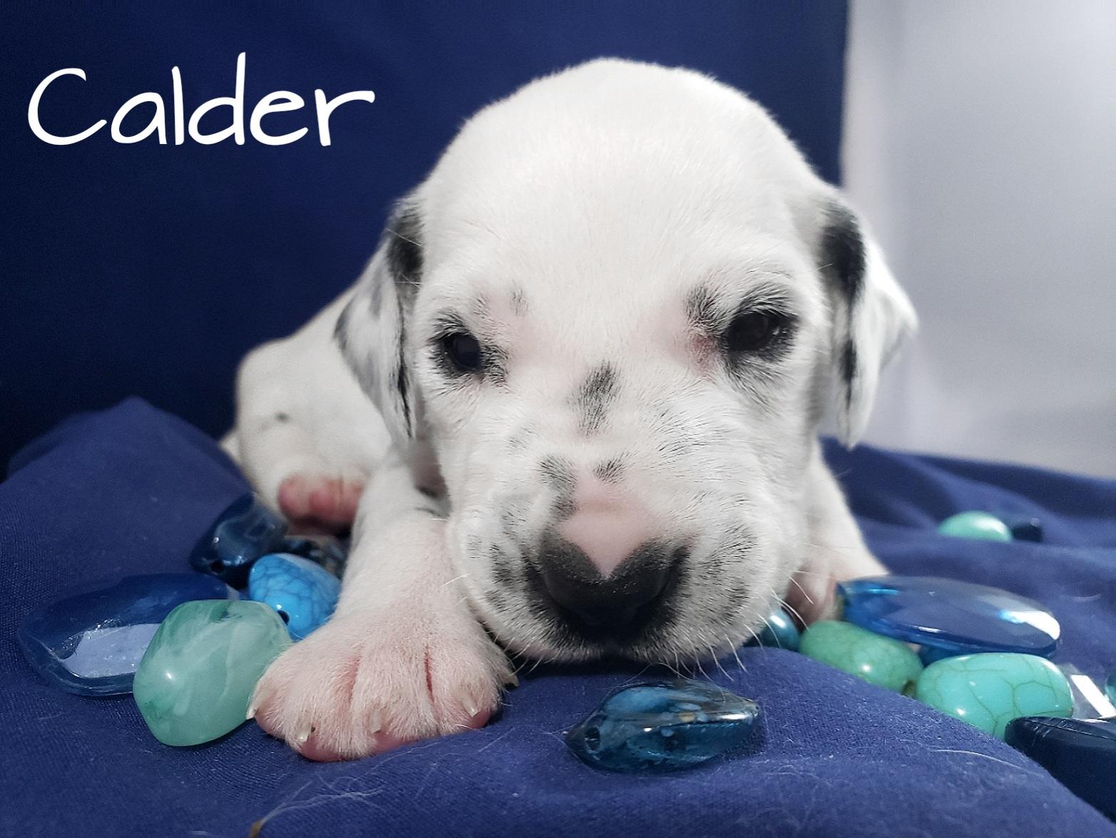 Calder-2w (6)
