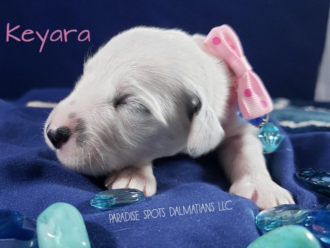 Keyara-1w (4)