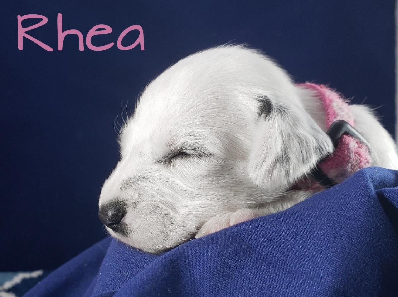Rhea-2w (6)