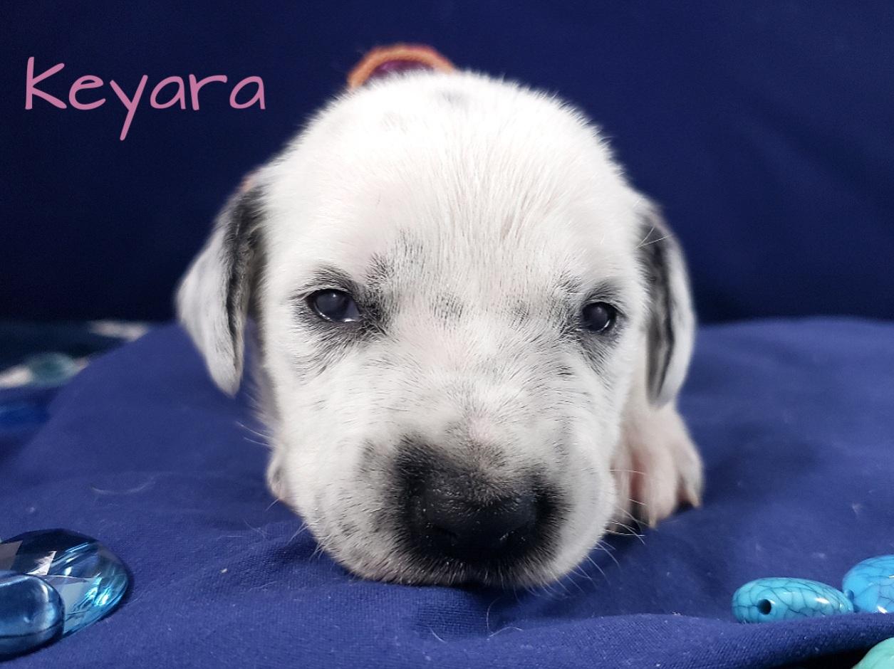 Keyara-2w (4)