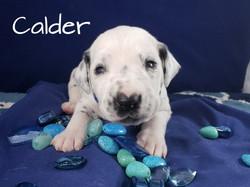 Calder-2w (5)