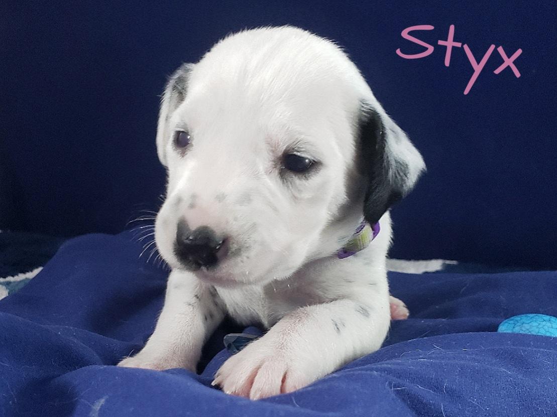 Styx-2w (8)