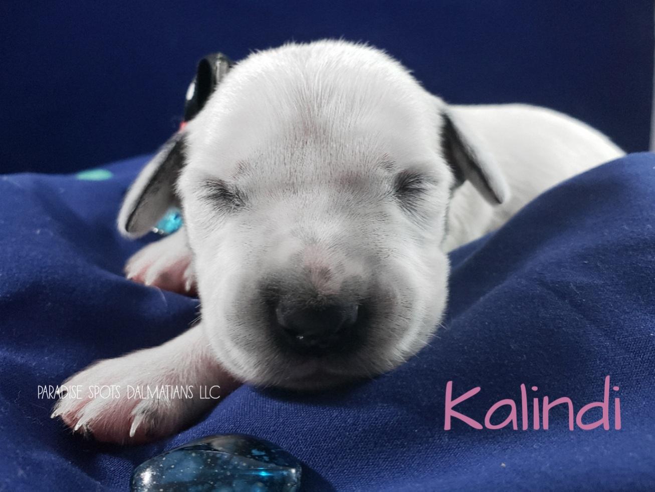 Kalindi-1w (1)