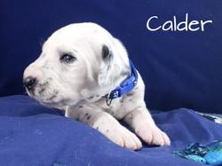 Calder-2w (4)