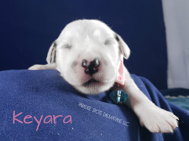 Keyara-1w (1)