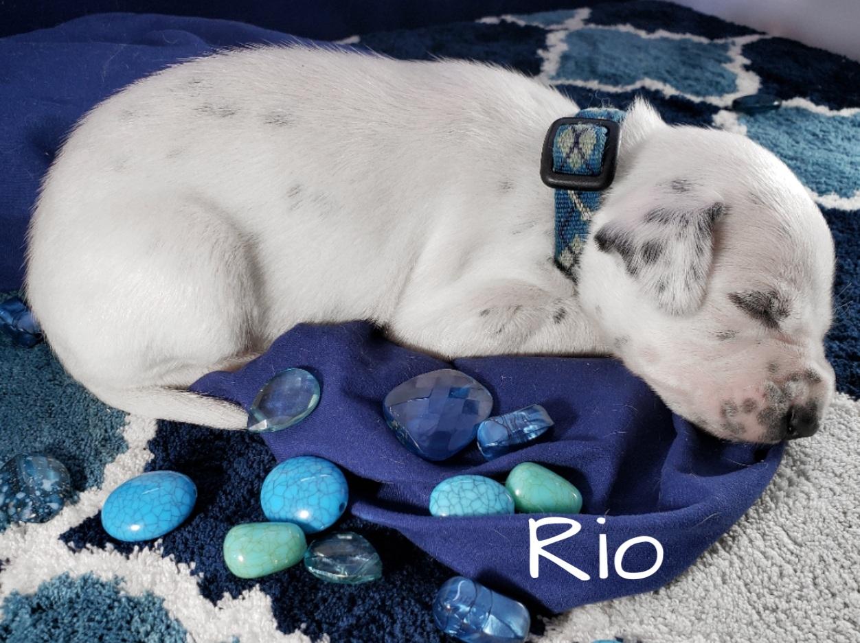 Rio-2w (7)