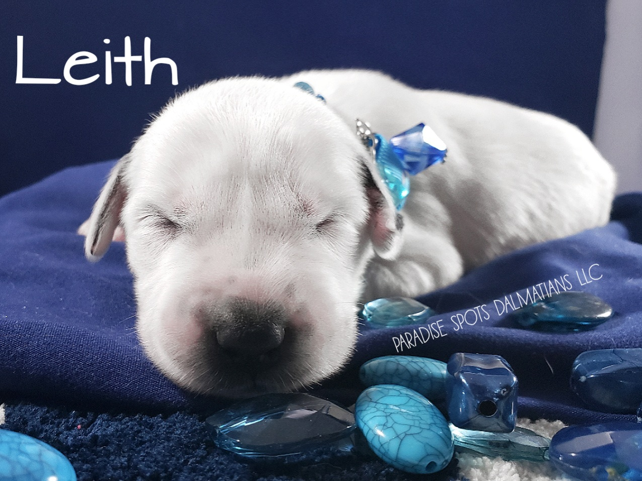 Leith-1w (1)