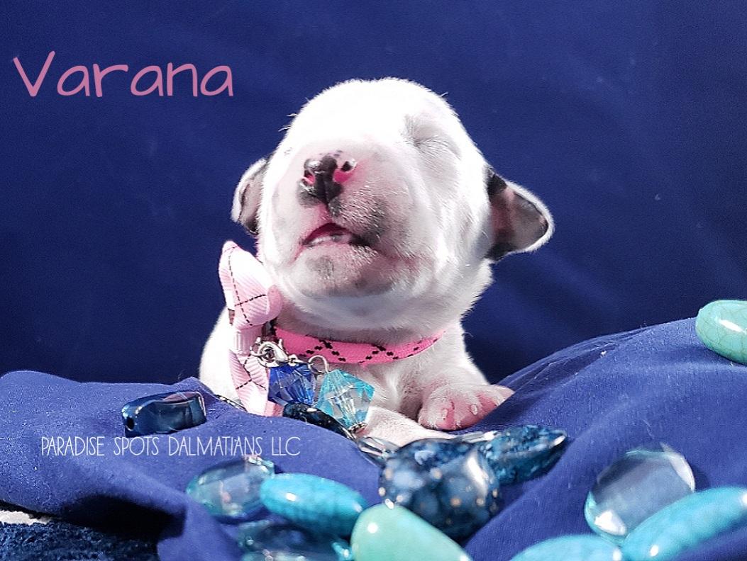 Varana-1w (4)