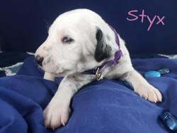 Styx-2w (1)