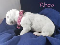 Rhea-2w (3)