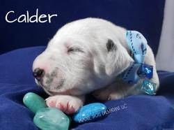 calder-1w (3)